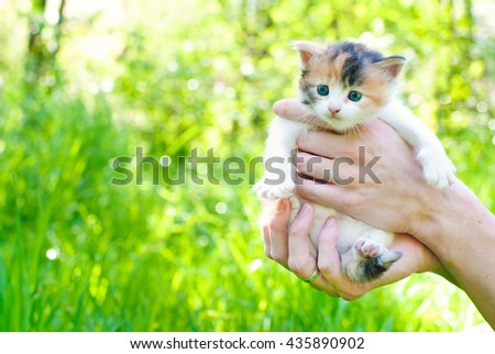 Kitten in the Green Grass in Summer. Beautiful Little Cat with playing Outdoors