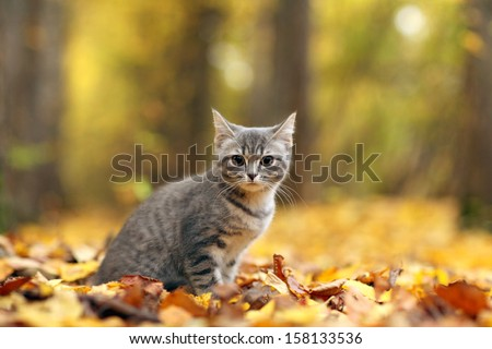 kitten in yellow leaves - stock photo