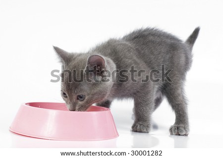 kitten is having a meal - stock photo