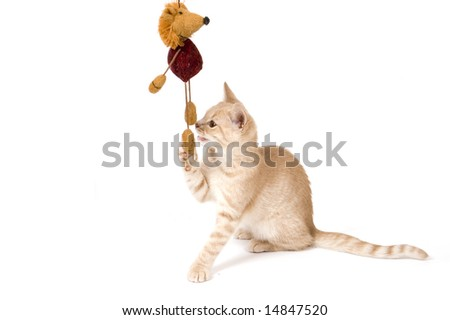 kitten is playing isolated on a white background