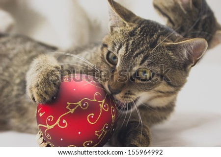 Kitten is playing with a red christmas ball. - stock photo