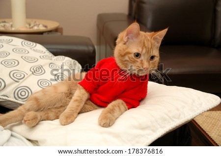 Kitten is resting on a pillow, wearing a red sweater. - stock photo