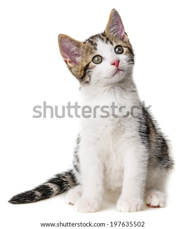 kitten isolated on a white background - stock photo