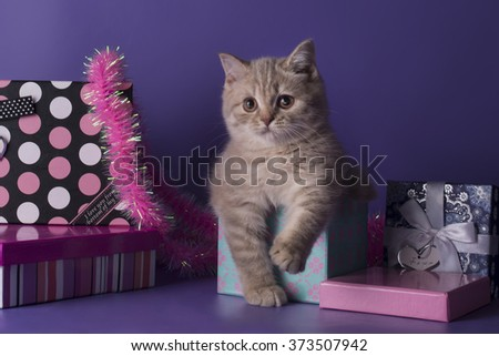 Kitten isolated on purple background with presents - stock photo