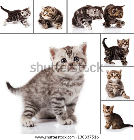 kitten isolated on white background. cat collection. - stock photo