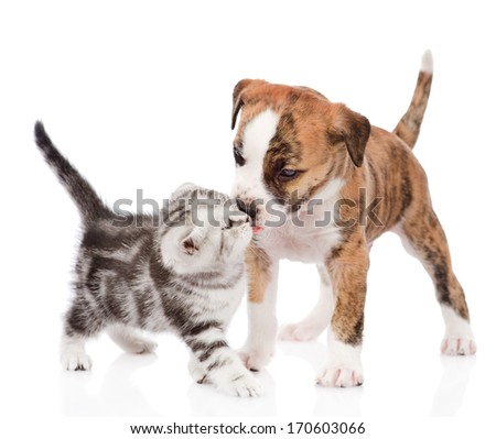 kitten kissing puppy. isolated on white background - stock photo