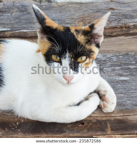 Kitten laying down on a floor. - stock photo