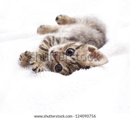 kitten laying on a white blanket - stock photo
