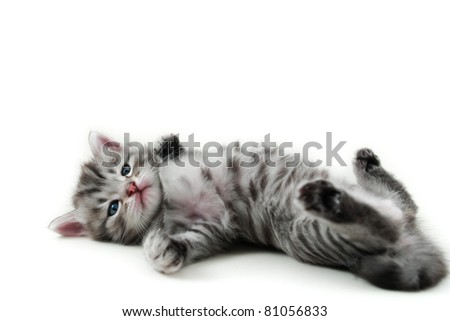 Kitten lays on white background - stock photo