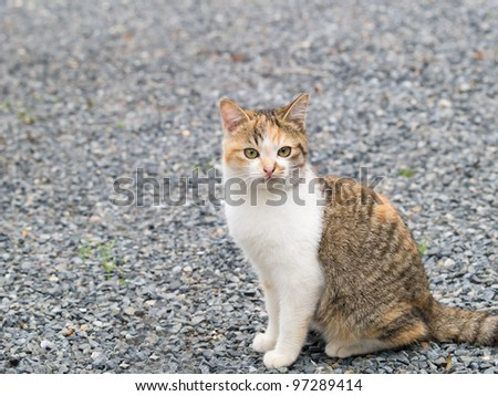 Kitten Looking At Camera - stock photo