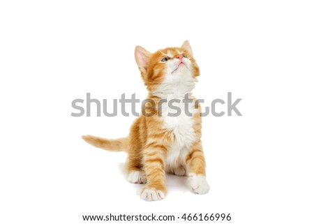 Kitten looking on white background