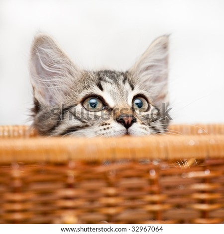 Kitten looking out of the basket, shallow DOF - stock photo
