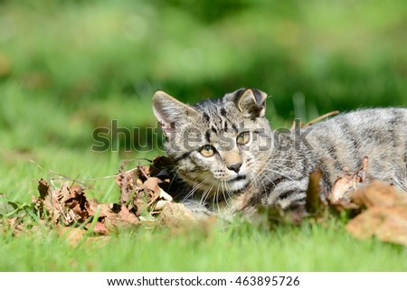 Kitten lying on the meadow in the leaves