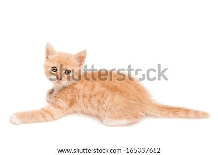 Kitten lying on the studio floor, isolated on white background