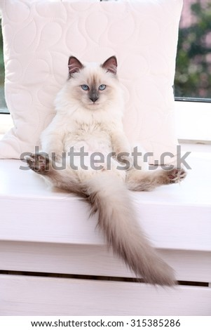 Kitten lying on windowsill, closeup - stock photo