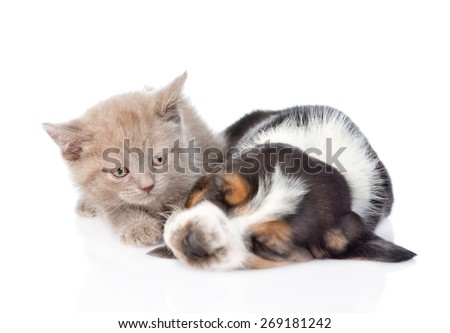 Kitten lying with sleeping puppy. isolated on white background - stock photo