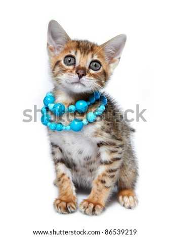 Kitten of the Bengal breed. Age - 1 month - stock photo