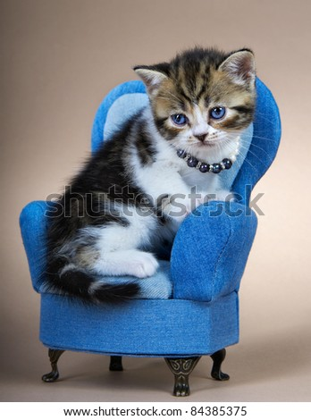 Kitten of the British breed. Age - 1 month - stock photo