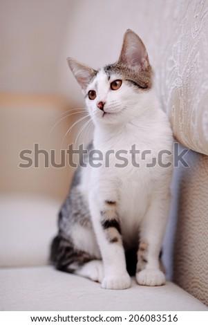 Kitten on a sofa. Striped not purebred kitten. Small predator. Small cat. - stock photo