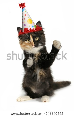 Kitten on a White Background With Birthday Hat - stock photo