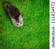 Kitten on grass background. Top view - stock photo