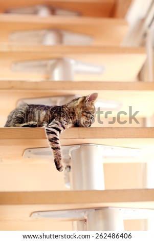 Kitten on staircase, indoors - stock photo