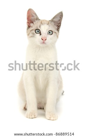 Kitten, on white background. - stock photo
