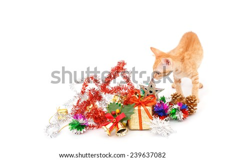 Kitten   ( Orange strip  color baby cat ) play with Christmas Object Isolated on white background - stock photo