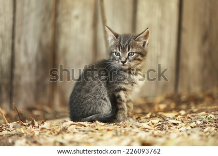 Kitten outdoors - stock photo