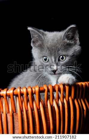 Kitten playing in a basket - stock photo