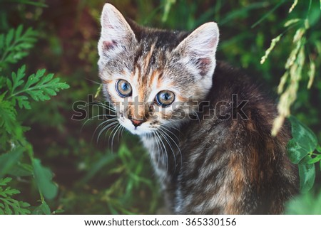 Kitten playing in the green grass at summer. Cute Tabby Cat, Pets care. Photo toned, faded - stock photo