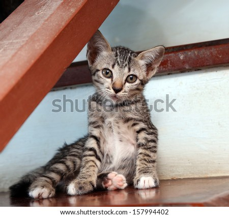 kitten playing on stair - stock photo