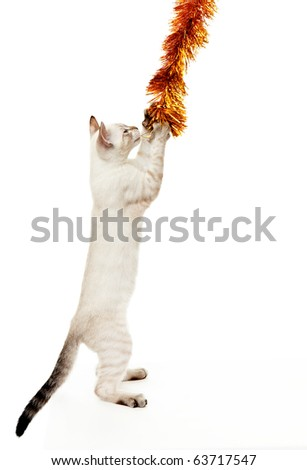Kitten playing with a Christmas tinsel. On the eastern calendar 2011 - the year the cat. - stock photo