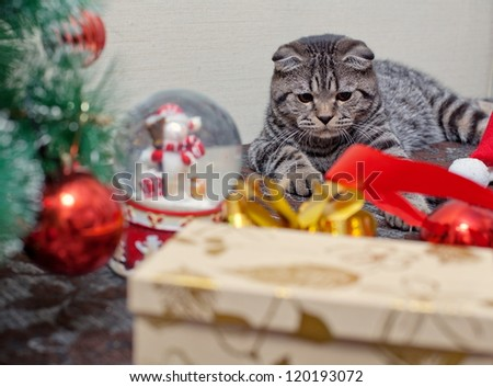 kitten playing with a gift - stock photo