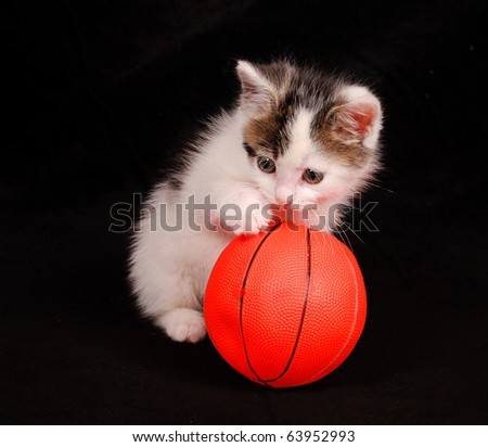 kitten playing with ball - stock photo