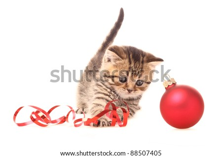 Kitten playing with Christmas Decorations - stock photo