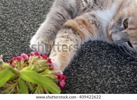 kitten playing with flowers  - stock photo