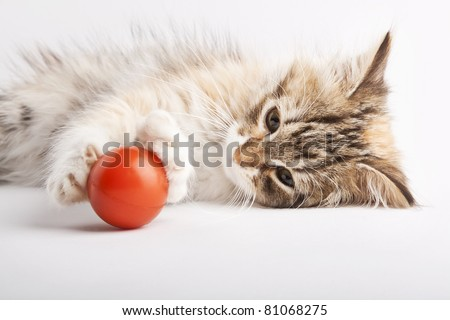 Kitten playing with red ball