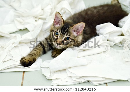 kitten playing with toilet paper - stock photo