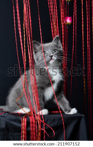 Kitten portrait, cat playing or sitting in string on an isolated black background - stock photo