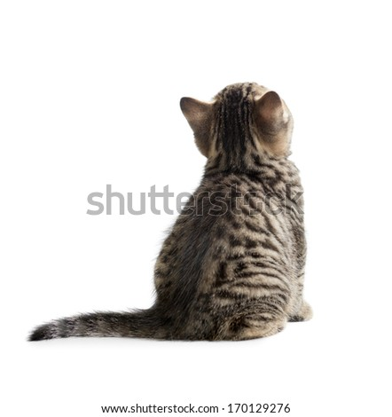 kitten rear or back view isolated on white - stock photo