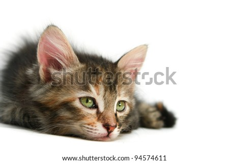 Kitten rests - stock photo