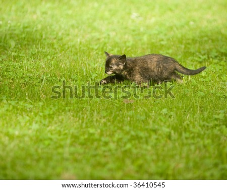 Kitten running through the grass and playing