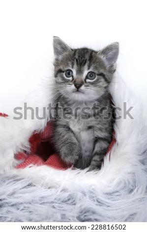 kitten sat in a santa hat - stock photo