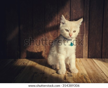 kitten sit face be serious on wooden with light from windows vintage