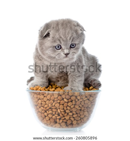 Kitten sitting on bowl with dry cat food. isolated on white background - stock photo
