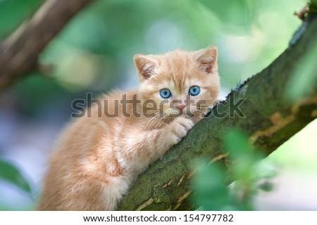 Kitten sitting on the tree - stock photo