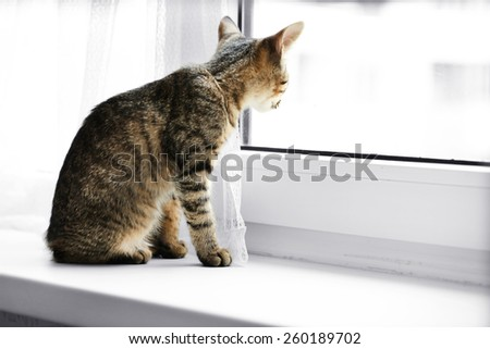 Kitten sitting on windowsill, closeup - stock photo