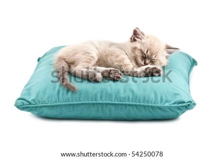 kitten sleep on pillow isolated on white - stock photo