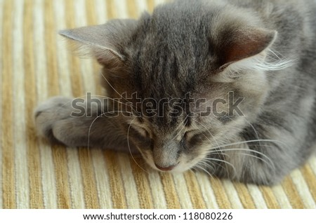 kitten sleeping - stock photo